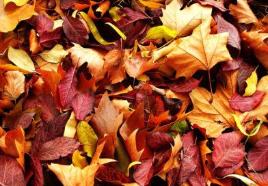 Вироби з осіннім листям – ідеї для натхнення