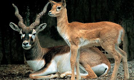 rivne-zoo
