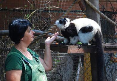 Безкоштовні тематичні екскурсії в Зоопарку