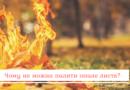 Чому не можна палити опале листя?